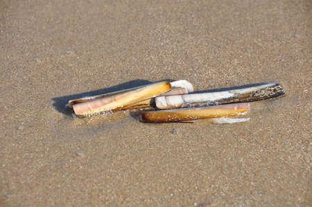 Schelp in Sand