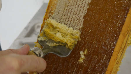 Artisanal technic to open honey alveoli. Stockfoto