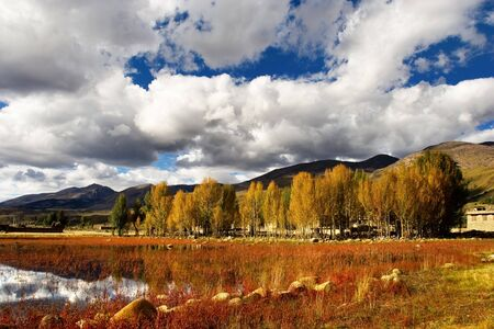 sichuan province: Day view of  red grass wetland at Daocheng Sichuan Province China Stock Photo