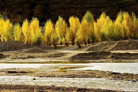 sichuan province: Autumn view of  trees at Daocheng Sichuan Province China Stock Photo