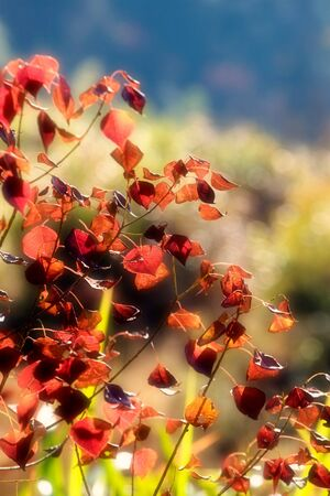autmn: Day view of autmn leaves