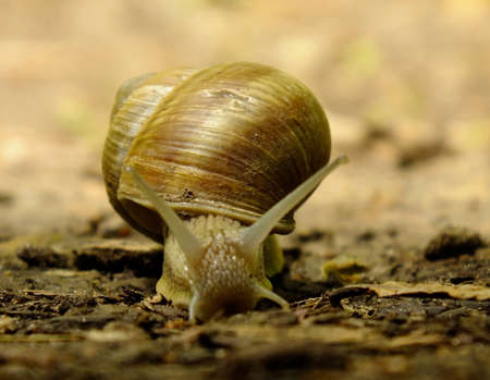 hermaphrodite: snail on the ground.