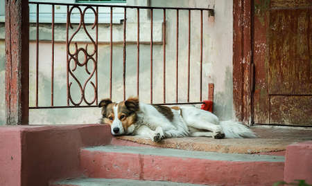 A lonely dog lies near the entrance to the old house. Stok Fotoğraf