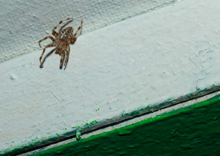 A spider sits in the corner of the veranda ceiling. Stok Fotoğraf