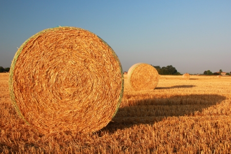 bales: Yellow hay bale in a farm Stock Photo