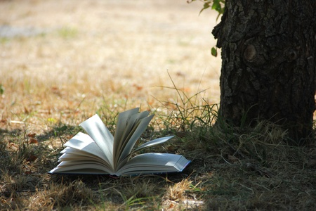 Book near a tree Stock Photo