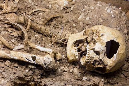 erectus: esqueleto