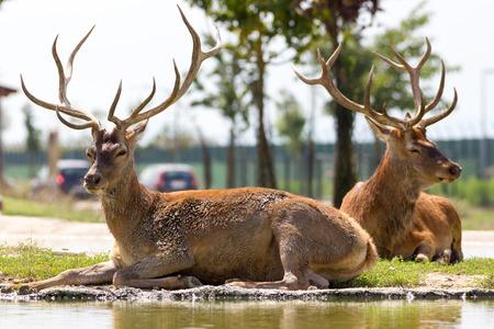 Beautiful deer photo