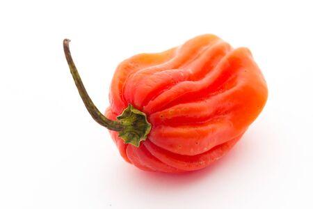 habanero: Habanero pepper
