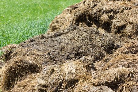 manure: Pile of manure