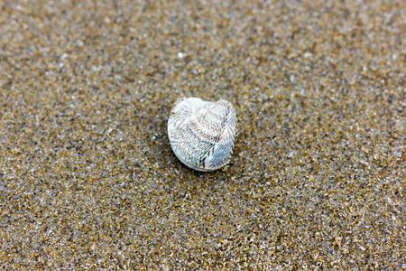 clam: Clam lonely beach