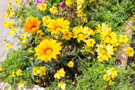flower box: Wood flower box