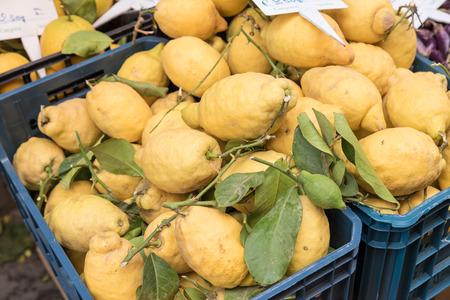 Limoni di Sorrento Naples Italy