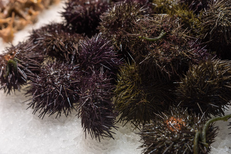 Sea urchin in the market Banco de Imagens