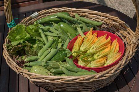 Basket with seasonal vegetables Banco de Imagens