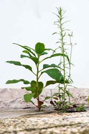 Plants grow in the cement
