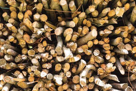 Texture of cut wooden trunks