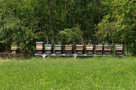 Row of honey in the meadow 写真素材