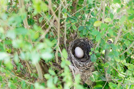 Bird nest with egg