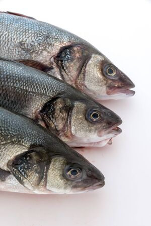 Sea bass with white background