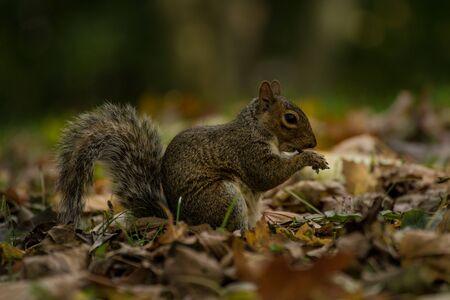 Squirrel eating in the park Reklamní fotografie