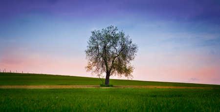 aplomb: lonely tree