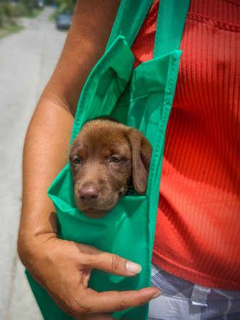 k9: Dog in bag
