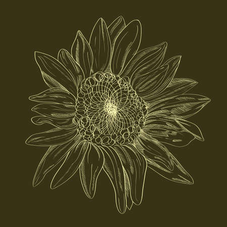 Vector hand-drawing flower. Card, or textile design element