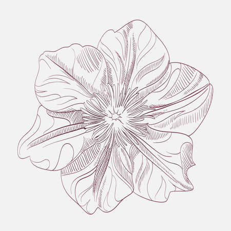 fondness: Hand-drawing flower. Card, or textile design element.