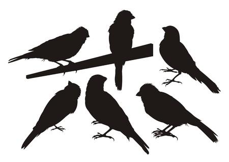 kanarienvogel: Sechs Kanarischen Vogel Silhouetten