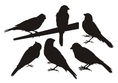 Six canary bird silhouettes Vector