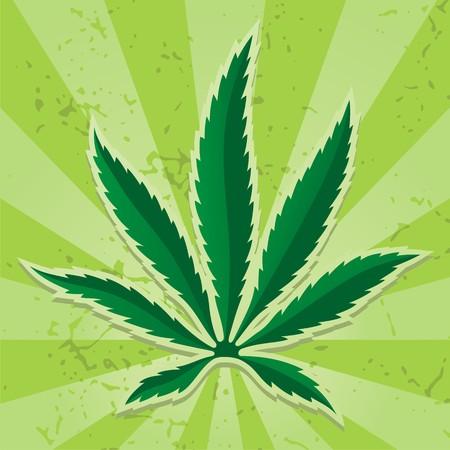 hanf: Cannabis-Blatt-Symbol auf grunge hellgr�n Hintergrund