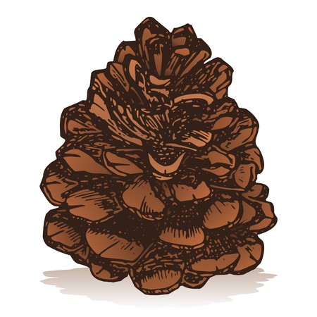 pine cone: Pinecone icon isolated on white background sketch style