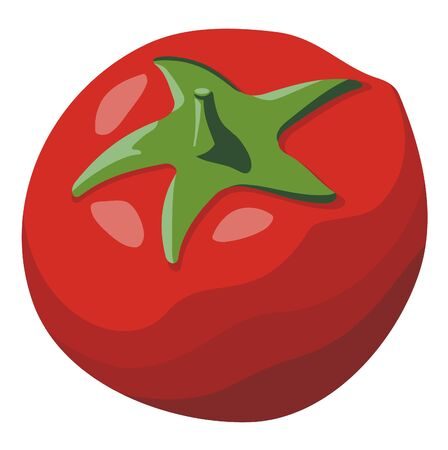 Red tomato simple illustration isolated on white background Stock Vector - 4544029