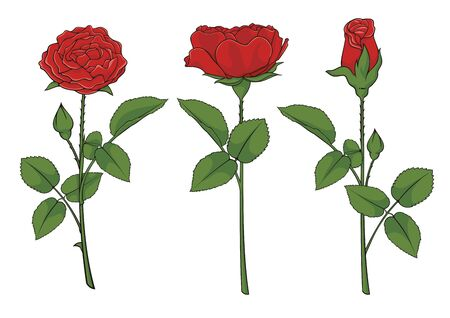 Illustration of three red roses isolated on white background.