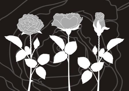 Illustration of white roses silhouettes on dark background. Stock Vector - 9934843