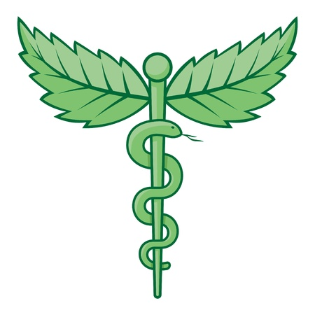 medical herbs: Single snake caduceus with mint leaves isolated on white background.