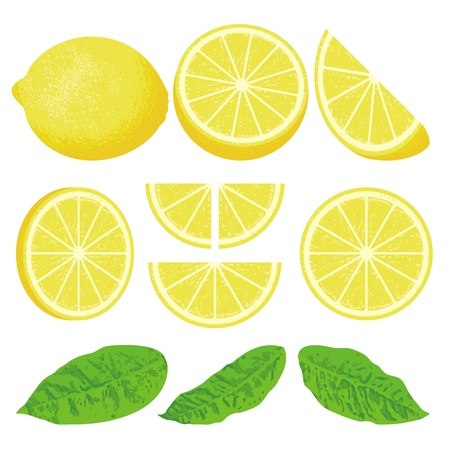 A whole lemon and slices at different angles, also three versions of leaves.