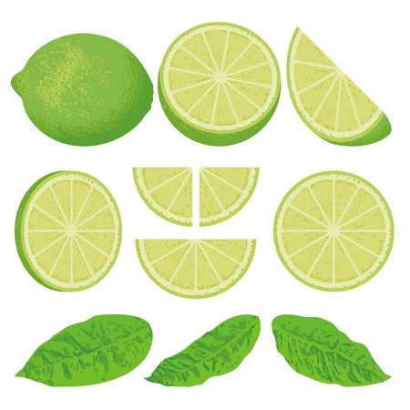 A whole lime lemon and slices at different angles, also three versions of leaves.
