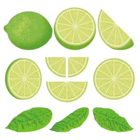 Een hele limoen citroen en plakjes vanuit verschillende hoeken, ook drie versies van bladeren.