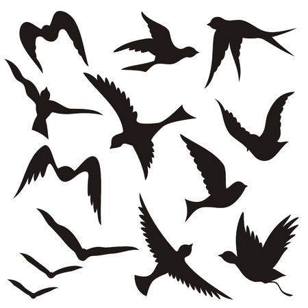 A set of flying birds silhouettes isolated on white background.