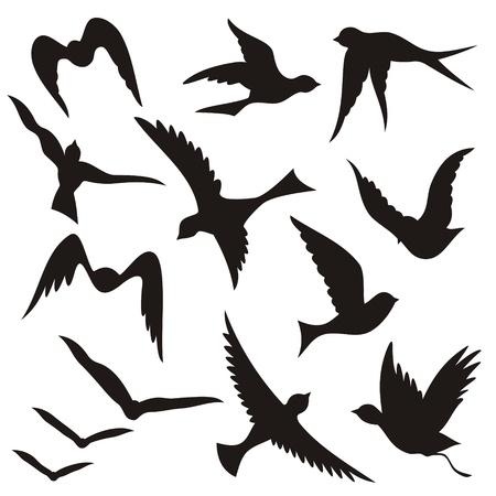 Un ensemble d'oiseaux qui volent des silhouettes isolées sur fond blanc.
