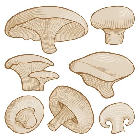 Beige mushroom icons with woodcut shading isolated on white background.