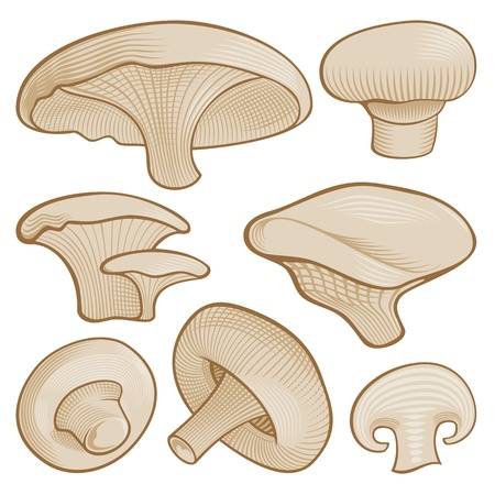 Beige mushroom icons with woodcut shading isolated on white background. Stock Vector - 11092923