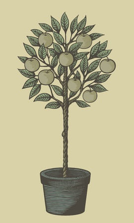Woodcut style decorative apple tree in plant pot on tan background. Vector