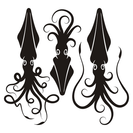 squid: Three decorative squid silhouettes isolated on white background.