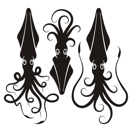 calamar: Tres siluetas decorativas de calamar aislados en fondo blanco. Vectores