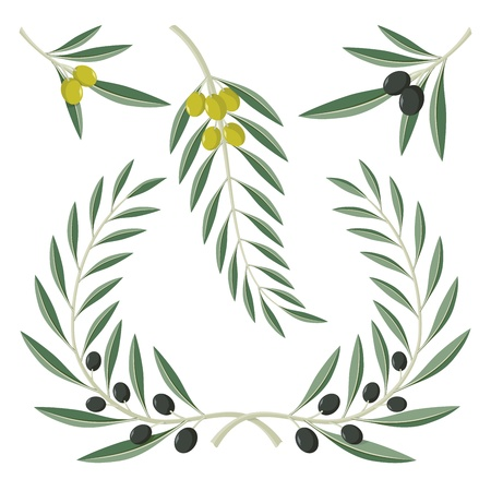 Various olive branches and wreath isolated on white background.