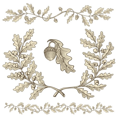 Hand drawn beige oak wreath and branch dividers with acorns with woodcut shading isolated on white background.