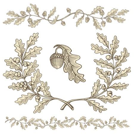 Hand getrokken beige eik krans en tak verdelers met eikels met houtsnede schaduw op een witte achtergrond.